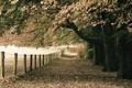 Картинка осень, природа, парк, листва, монотонность