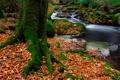 Картинка листья, мох, осень, деревья, ручей, лес, камни
