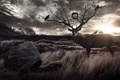 Картинка трава, пейзаж, птицы, камень, олень, рога, ветвь