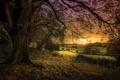 Картинка поле, листья, закат, дерево, ветви, сельская местность, оранжевое небо