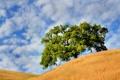 Картинка лето, небо, облака, холмы, Дерево