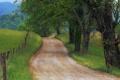 Картинка дорога, трава, деревья, природа, фото, дерево, пейзажи