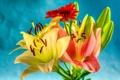 Картинка природа, букет, лилия, лепестки