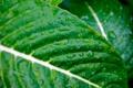 Картинка капли, макро, фото, зелёные листья