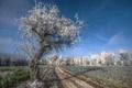 Картинка иней, дорога, дерево