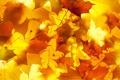 Картинка осень, листья, свет, кленовые листья, дубовые листья