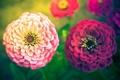 Картинка лето, цветы, природа, растения