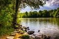 Картинка лес, деревья, озеро, камни, берег, США, Centennial Lake