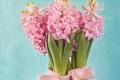 Картинка листья, фон, розовые, цветки, тесьма, Гиацинты