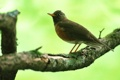 Картинка дерево, обои, ветка, Птица