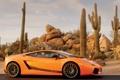 Картинка пустыня, кактусы, Gallardo