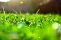 Картинка зелень, солнце, макро, лучи, свет, блики, Трава