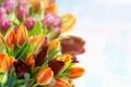 Картинка букет, тюльпаны, бутоны