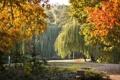 Картинка осень, листья, пейзаж, ветки, природа, парк, дороги