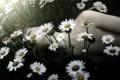 Картинка цветы, настроение, парень