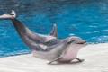 Картинка Dolphin, sea, water, fauna