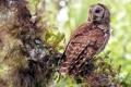 Картинка лес, природа, дерево, сова, птица