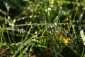 Картинка лето, трава, макро, роса