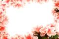 Картинка Крупным планом, Цветы, фото, Азалия