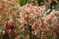 Картинка трава, природа, растения, боке