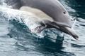 Картинка вода, брызги, дельфин