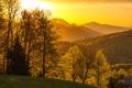 Картинка осень, солнце, деревья, горы, листва, Лес