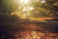 Картинка осень, листья, лучи, свет, деревья, природа, леса