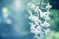 Картинка белые, soft orchids, макро