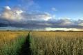 Картинка поле, пейзаж, дождь, овёс