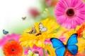 Картинка цветы, коллаж, бабочка, лепестки, мотыдек