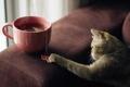 Картинка кошка, чай, шерсть, играет, пакетики