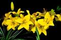 Картинка природа, фон, лилии, букет, лепестки