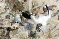 Картинка птицы, природа, гнездо
