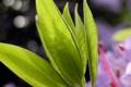 Картинка растение, природа, листья, макро