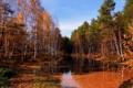Картинка осень, лес, природа, река, фото, березы