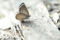 Картинка природа, фон, бабочка