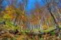 Картинка осень, парк, березы, роща, Хорватия, Plitvice