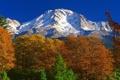 Картинка горы, лес, Калифорния, осень, США