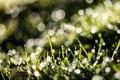 Картинка трава, капли, макро, роса, блики, весна, утро