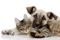 Картинка кот, отдых, собака, друзья