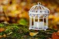 Картинка осень, листья, свечи, боке