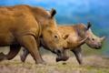 Картинка семья, Африка, рог, белый носорог