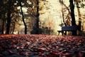 Картинка листья, осень, парк