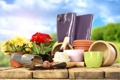 Картинка цветы, горшки, лопатка, луковицы, садоводство