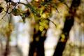 Картинка листья, свет, деревья, блики, размытость, в лесу