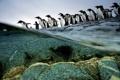 Картинка вода, природа, пингвины