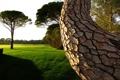 Картинка газон, трава, лето, тень, лужайка, изогнутое, зелень