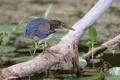 Картинка птица, болото, ветка, клюв