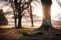 Картинка природа, утро, туман, дерево