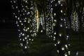 Картинка украшения, деревья, ночь, праздник, гирлянды, photographer, fairy lights